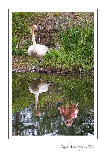 girl-with-swan-3-frm.jpg