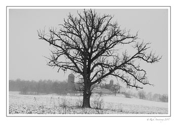 tree-and-farm-1-copy-copy.jpg