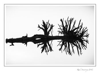 tree-reflection-2-bnw-frm-copy.jpg