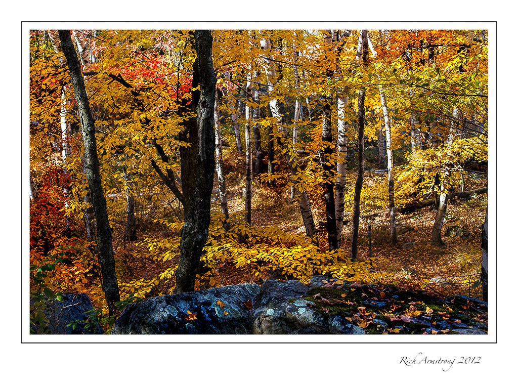 fall-color-1a-frm.jpg