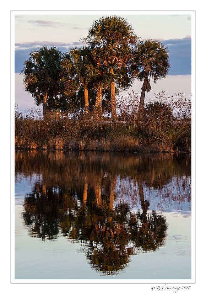 palm-tree-reflection-1-copy.jpg