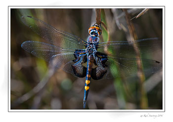 Black-Saddlebags.jpg