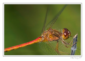dragon-fly-2-copy-2.jpg