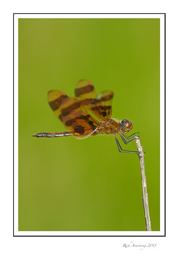dragon-fly-2-frm.jpg