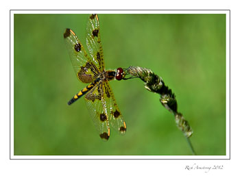dragon-fly-3-frm.jpg