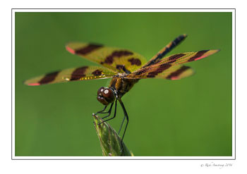 dragon-fly-3w.jpg