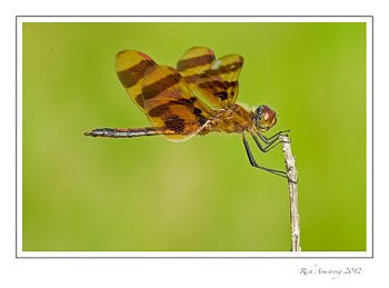 dragon-fly-7-frm.jpg