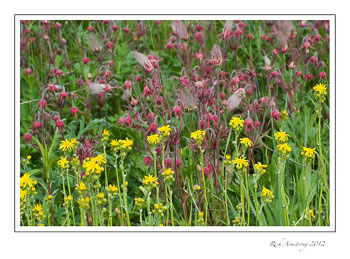 yellow-pink-frm.jpg
