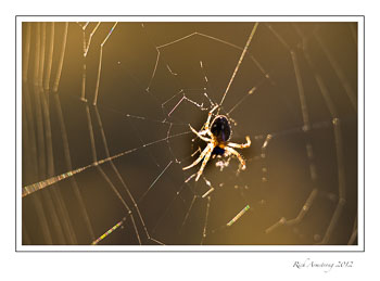 spider-in-web-2-frm.jpg