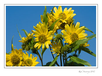 yellow-on-blue-3-frm.jpg