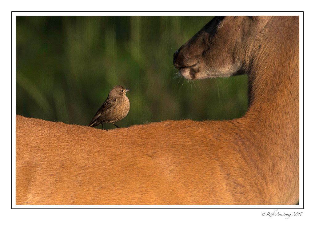 buck-and-bird-1c-copy.jpg